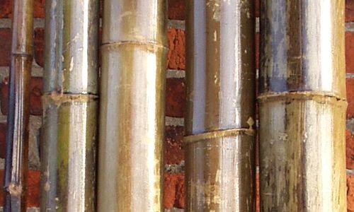 Bambusrohre, natur vorlackiert
