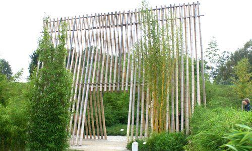 Bambusrohre, naturgelb