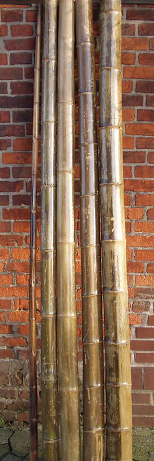Bambusrohre lackiert