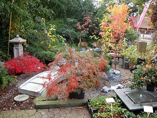 Sie finden auch japanische Ahorne, Azaleen, Formgehölze, Moosersatz und viele weitere Pflanzen für den asiatischen Garten bei uns