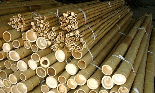 Bambusrohre, naturgelb 520 cm